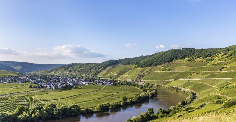 Kig ud over tyske vinmarker ved floden Mosel.