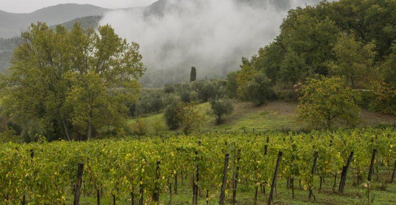 Photo of Tenute Piccini køber Chianti Geografico