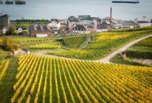 Vinmarker med Riesling