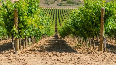 Photo of Ribera del Duero har vind i sejlene