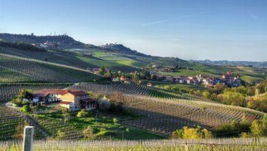 italienske vinproduktion