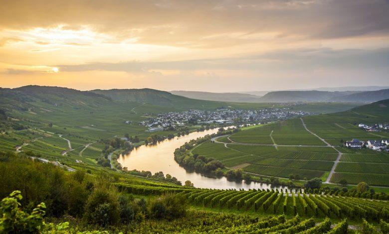 Vinudsigt ved floden Mosel