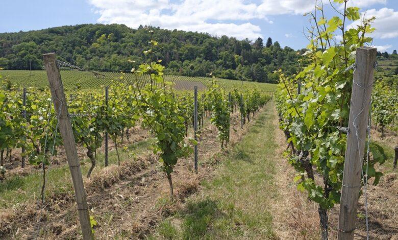 Tysk vinmark